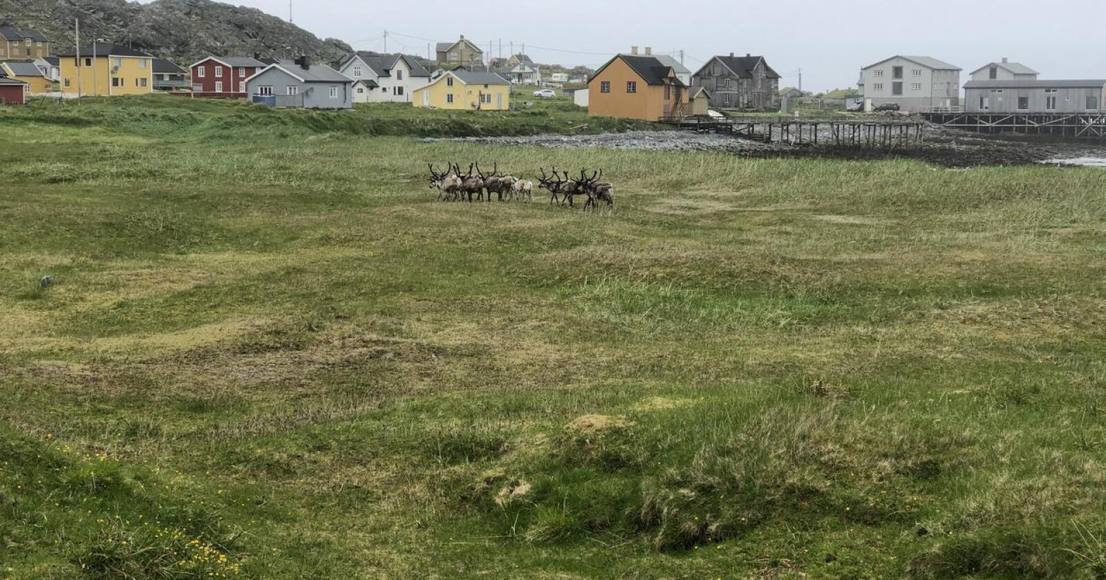 Resultatene viser at Finnmark er det geografiske området flest vil dra til for å oppleve unik lokalmat. Bildet er fra Hamningberg, et fraflyttet fiskevær i Båtsfjord kommune, ytterst på Varangerhalvøya. (Foto: Karl Erik Berge)