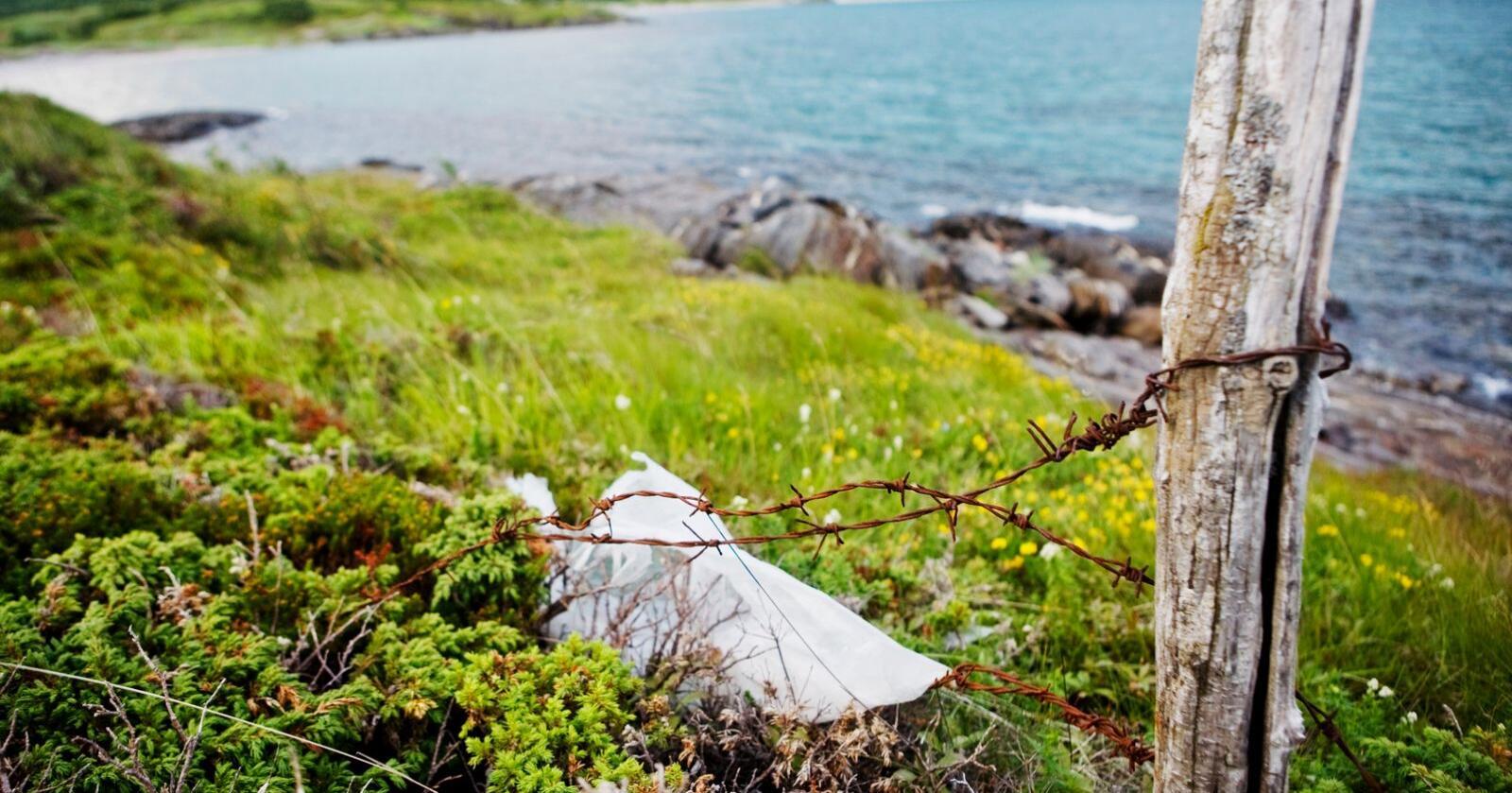 Gammelt gjerde med piggtråd i Steigen i Nordland.Foto: Kyrre Lien / NTB