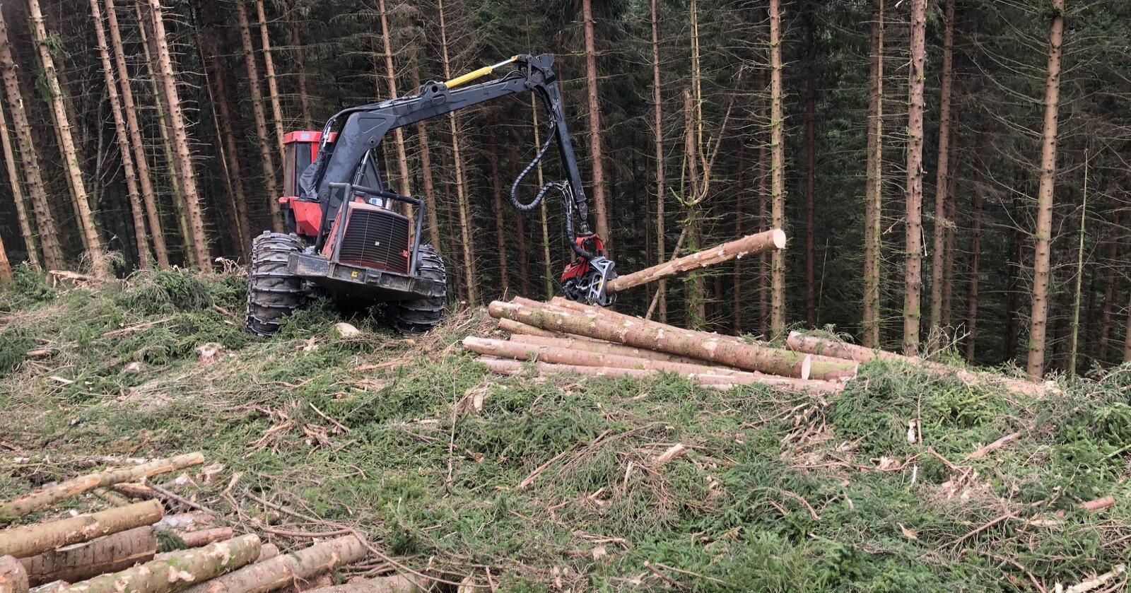 Ikkje berre lager: Skogen har flere tenester enn karbonbinding, skriv forskarane. Foto: Sveinung Håland