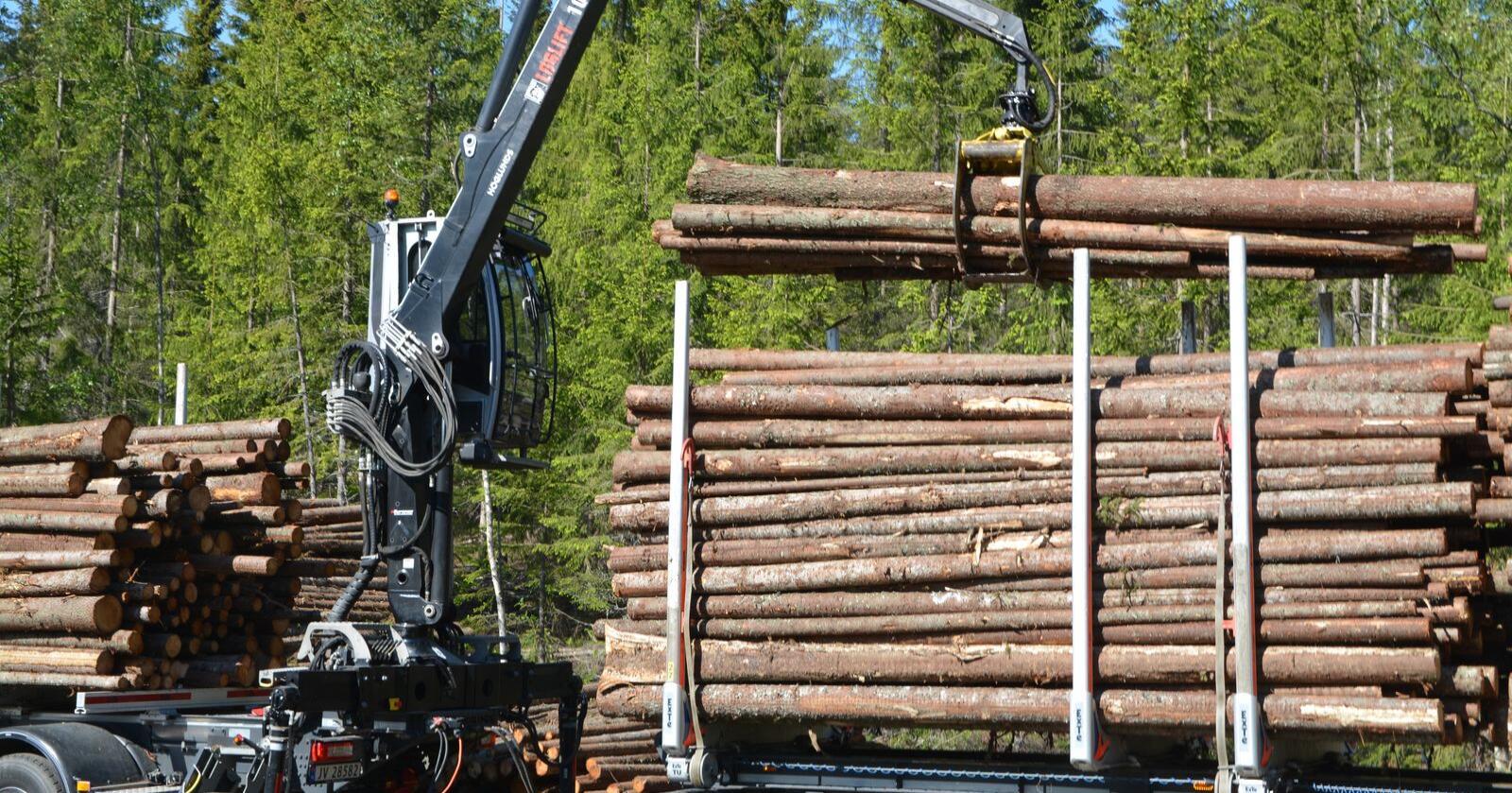 Eierskap: Opposisjonen frykter det blir enklere for utenlandske, kapitalsterke selskaper å overta skogeiendommer i Norge uten konsesjonsbehandling. Bildet er tatt i Buskerud.