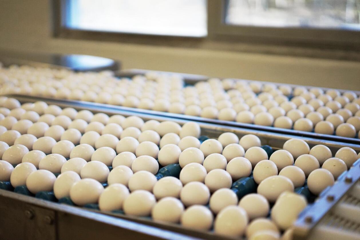 Mattilsynet følger nå med på om egg med fipronil kan ha kommet til Norge med ferdigmat. Nortura kan garantere at deres egg ikke ikke inneholder insektmiddelet. Foto: Benjamin Hernes Vogl