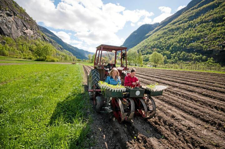 Etterspurt: Kompetansen til elevene på Sogn jord- og hagebruksskole er viktig. Økologisk mat er populært. Foto: Tom Boersmo