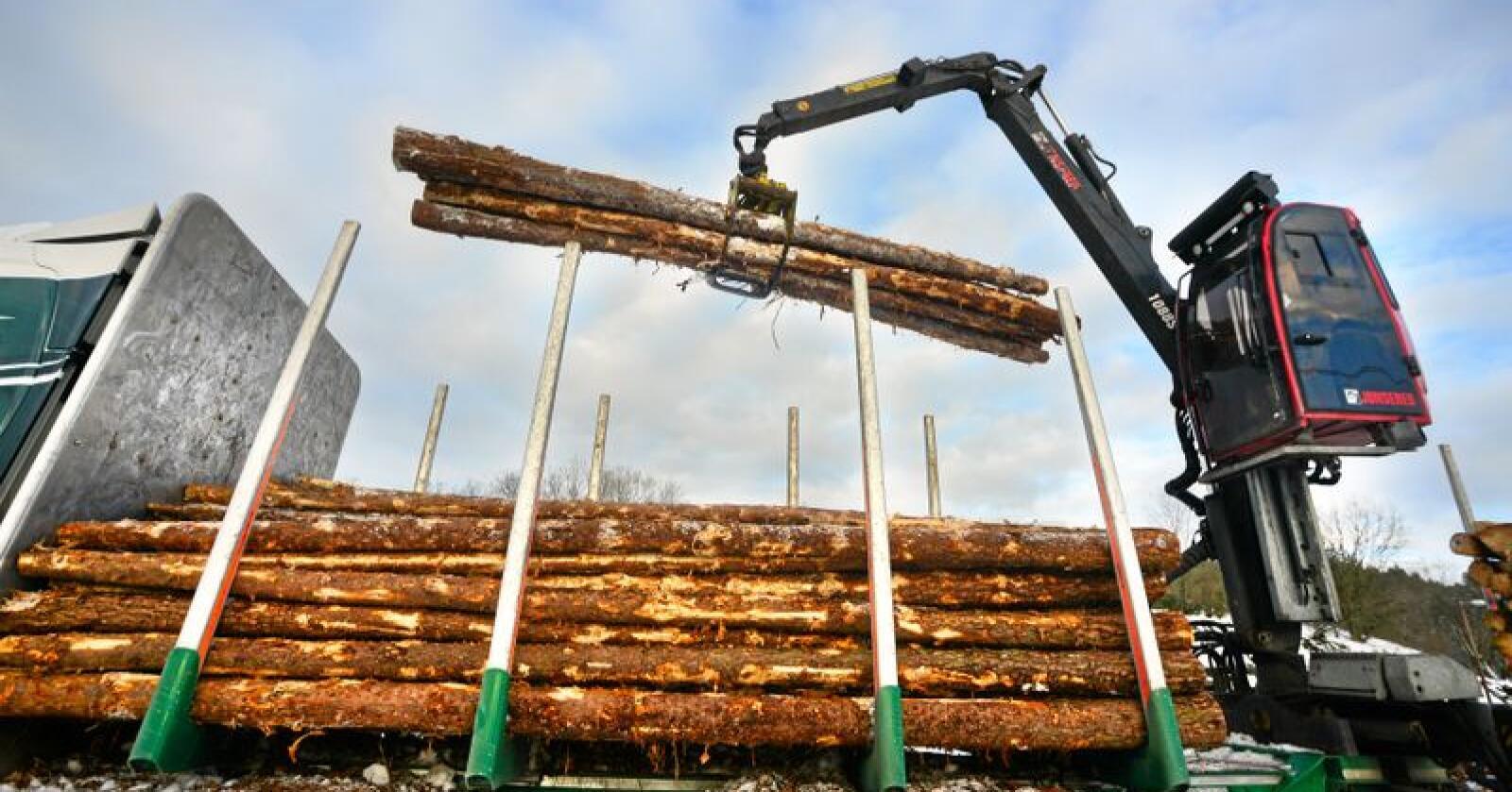 Skog: Viktig kilde til fornybart karbon. Foto: Siri Juell Rasmussen