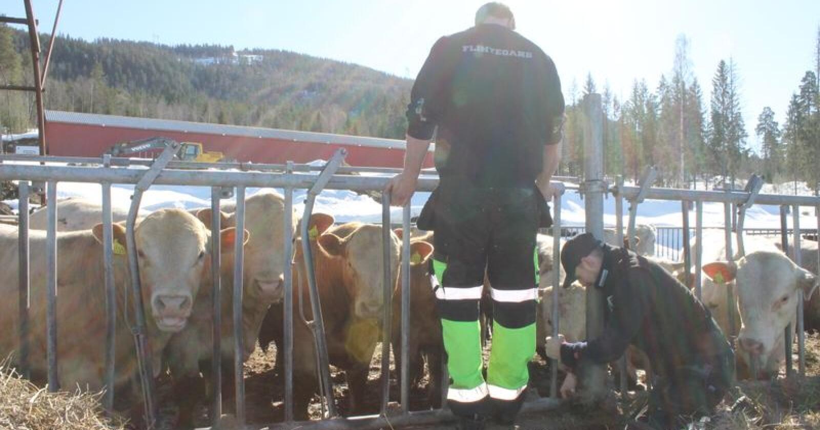Kjenner du en ung matprodusent, under 35 år, som også er et sunt forbilde kan du nominere han eller henne til «Årets unge bonde 2019». Illustrasjonsfoto: Norsk Landbruk