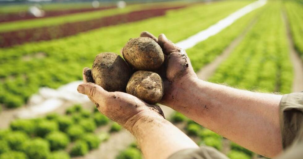 Norsk mat betyr friske planter. I en nylig gjennomført undersøkelse sier hele 90 prosent av forbrukerne at de velger norsk mat for å støtte den norske bonden og ta vare på norske arbeidsplasser. Foto: Matmerk