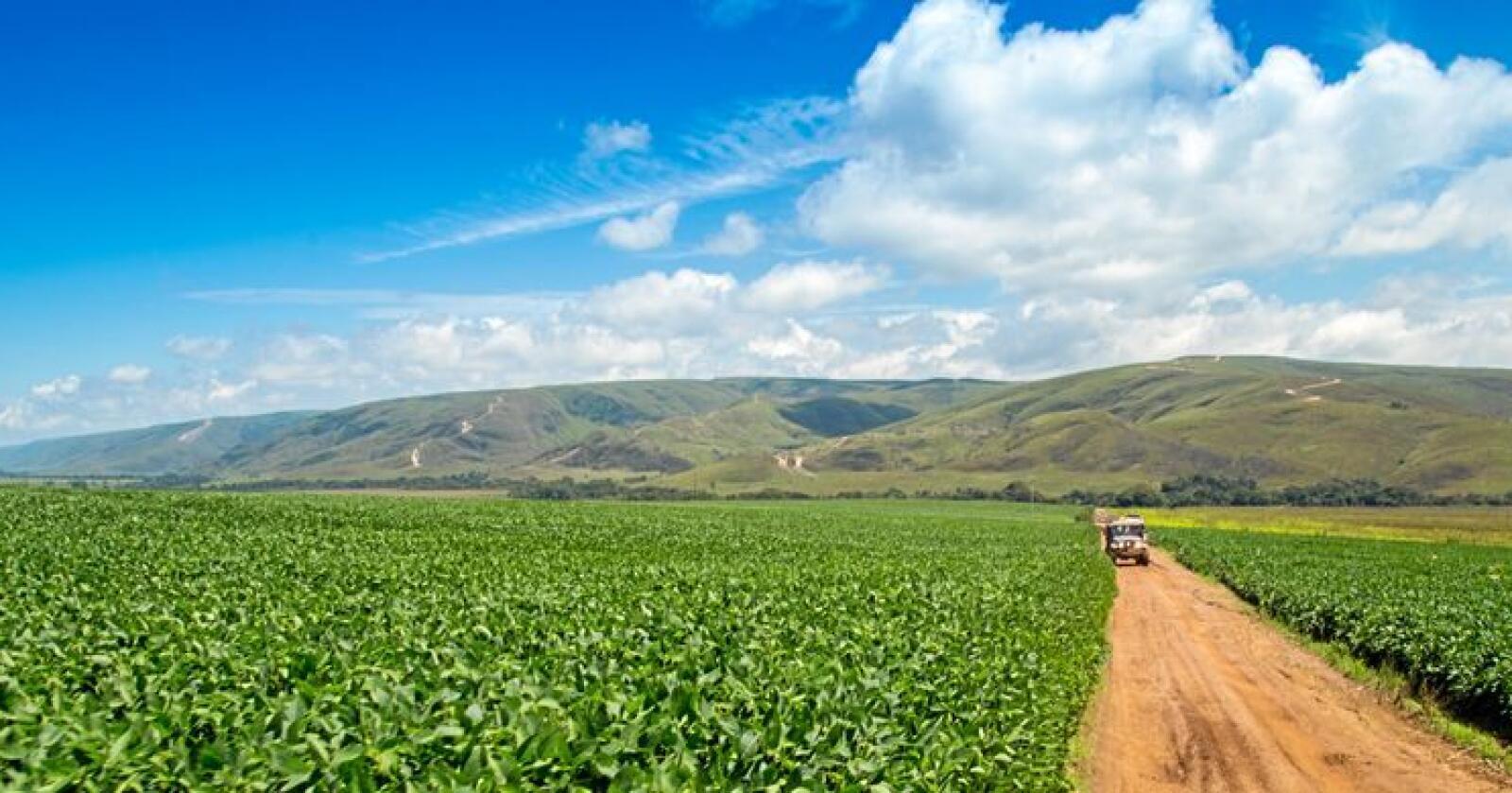 Brasils produksjon av soyabønner fører til øydelegging av regnskog. Foto: Mostphotos