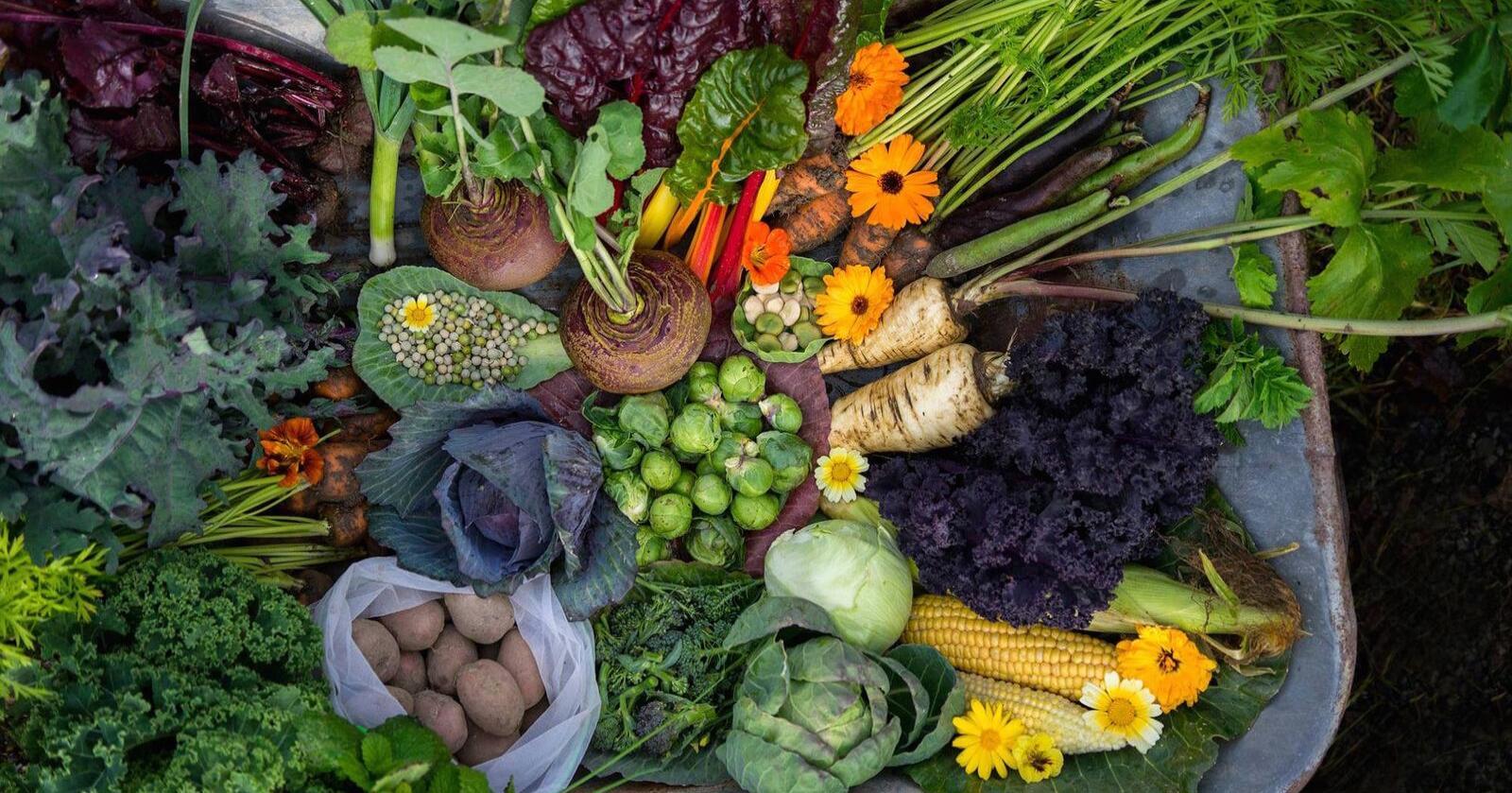 GRØNT LØFT: 22 representanter fra blant annet Gartnerhallen, Bama, NIBIO og mange flere aktører som kan knyttes til grøntsektoren, har sammen kommet fram til seks hovedområder som må prioriteres, for å løfte produksjon og salg av frukt og grønt. Foto: Bethi Dirdal Jåtun