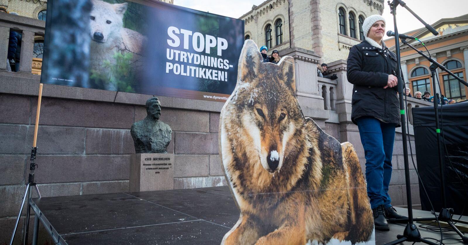 Oslo  20190112. Bak flere pappfigurer av ulv holder NOAH leder Siri Martinsen appell foran flere tusen demonstranter som møtte opp foran Stortinget for å demonstrere for å bevare ulv og andre rovdyr i Norge lørdag.  Foto: Heiko Junge / NTB scanpix