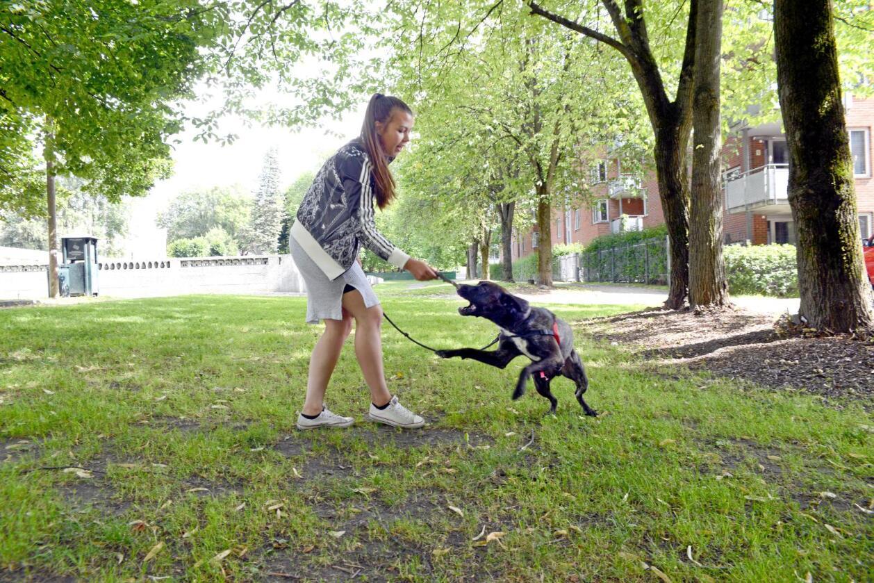 Celine Munoz (20) er glad for at det finnes et dyrepoliti, men mener ordningen burde vært nasjonal. Det er vanskelig for folk å vite hvor de skal ringe om de ser dyremishandling, tror hun. Her med hunden Rex. Foto: Mariann Tvete