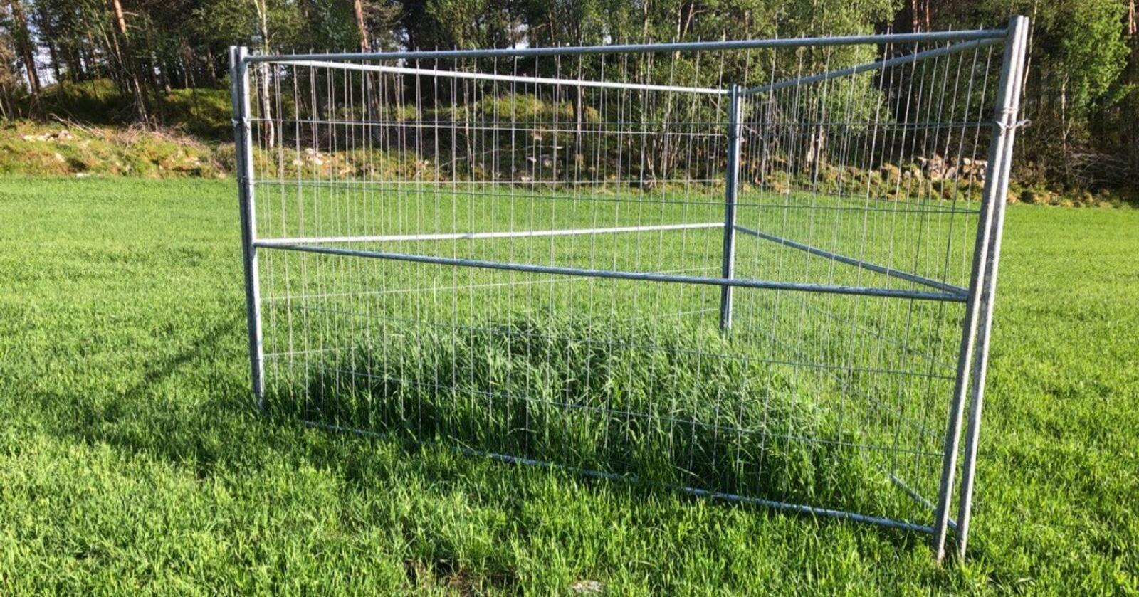INNENFOR: Dette burbildet er tatt av feltvert og bonde Knut Emil Mæle fra Aure. Hadde ikke hjort beitet på enga, ville den ha stått like høyt som graset inne i buret. Foto: Knut Emil Mæle