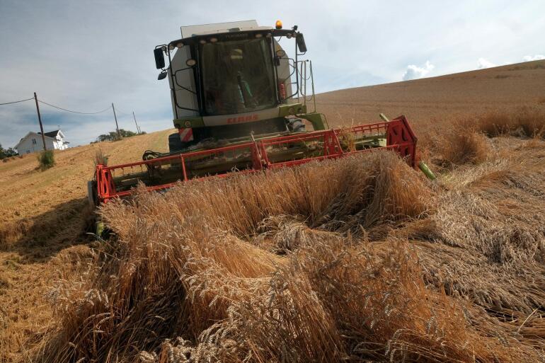 Det er levert mye korn til Felleskjøpet hittil i år. Foto: Ketil Blom Haugstulen