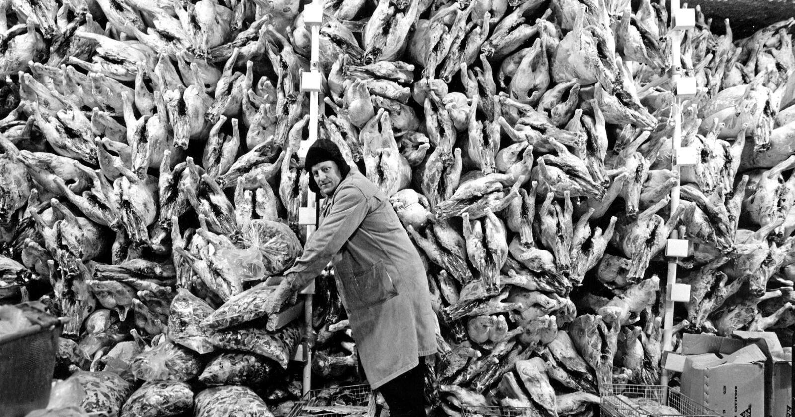 STOR ØKNING: Selv om nordmenn nå sjelden spiser kjøtt fra sau og verpehøne, har kjøttforbruket vårt gått kraftig opp de siste 50 årene. Her fra et slakteri i 1968.  Foto: NTB scanpix