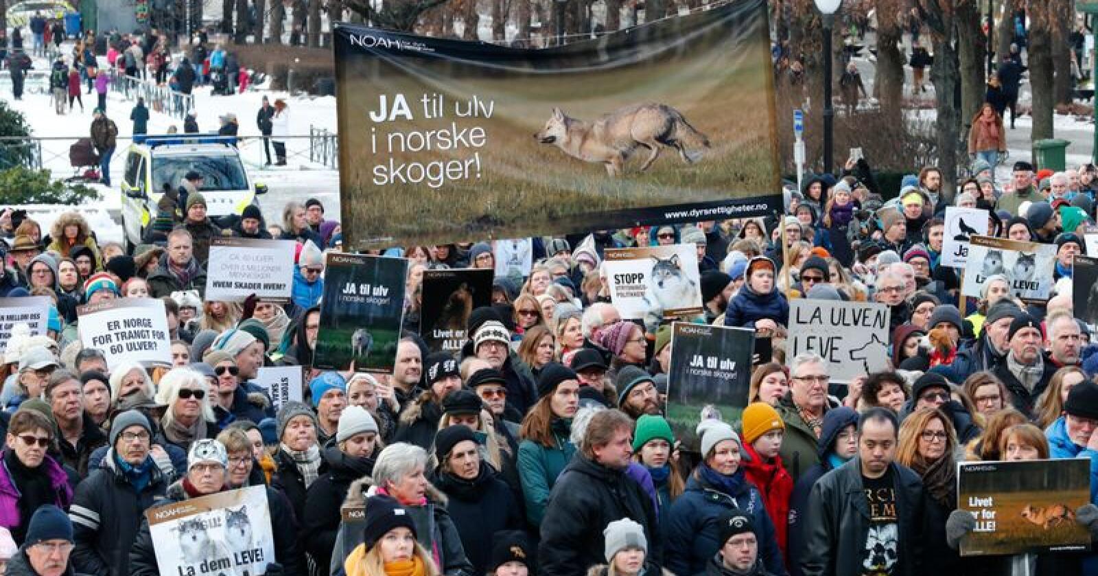 Mange møtte opp foran Stortinget for å demonstrere for å bevare ulv og andre rovdyr i Norge lørdag.Foto: Heiko Junge / NTB scanpix