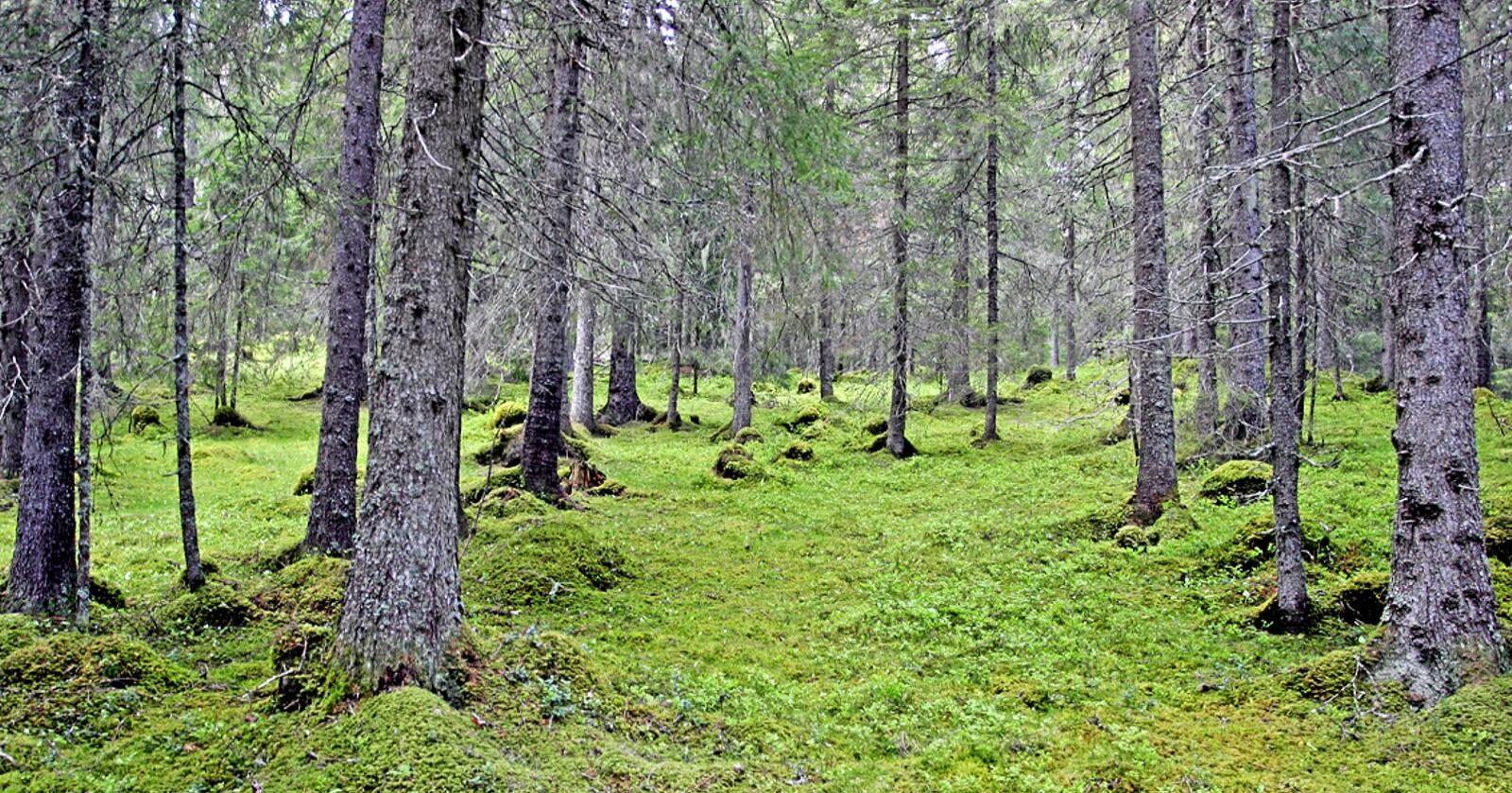 Kartlegging: Alt fra kalkskog, blåbærskog, enger, nakent berg, til veier og jorder skulle kartfestes i hver enkelt rute. Foto: John Y. Larsson / Nibio