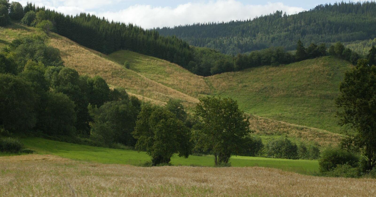 Størst arealendringer har det vært i de såkalte kornområdene, hvor en del kornareal har blitt erstattet med grasproduksjon. Arkivfoto: Norsk Landbruk