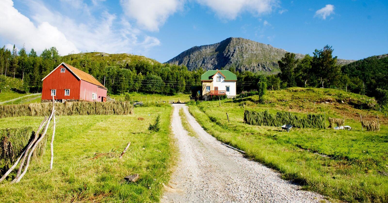 IDYLL: Mange drømmer om å bo på småbruk, men skal man lykkes, bør man ha både økonomien og kunnskapen på plass. Her fra Steigen i Nordland. Foto: Kyrre Lien / NTB
