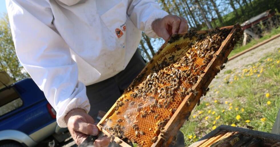 Terje Reinertsen har drevet med bier siden 1973 og fikk varroamidd i biene sine på 90-tallet. Etter ti år med en spesiell type avl klarte han å avle fram bier som tåler varroa bedre enn noen andre bier i verden.