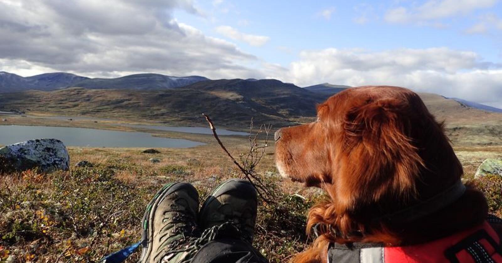 Fjellstyrene forvalter jakt, fangst og fiske og andre bruksretter i statsallmenningene i Sør- og Midt-Norge. (Foto: Torgeir Lande/NFS)