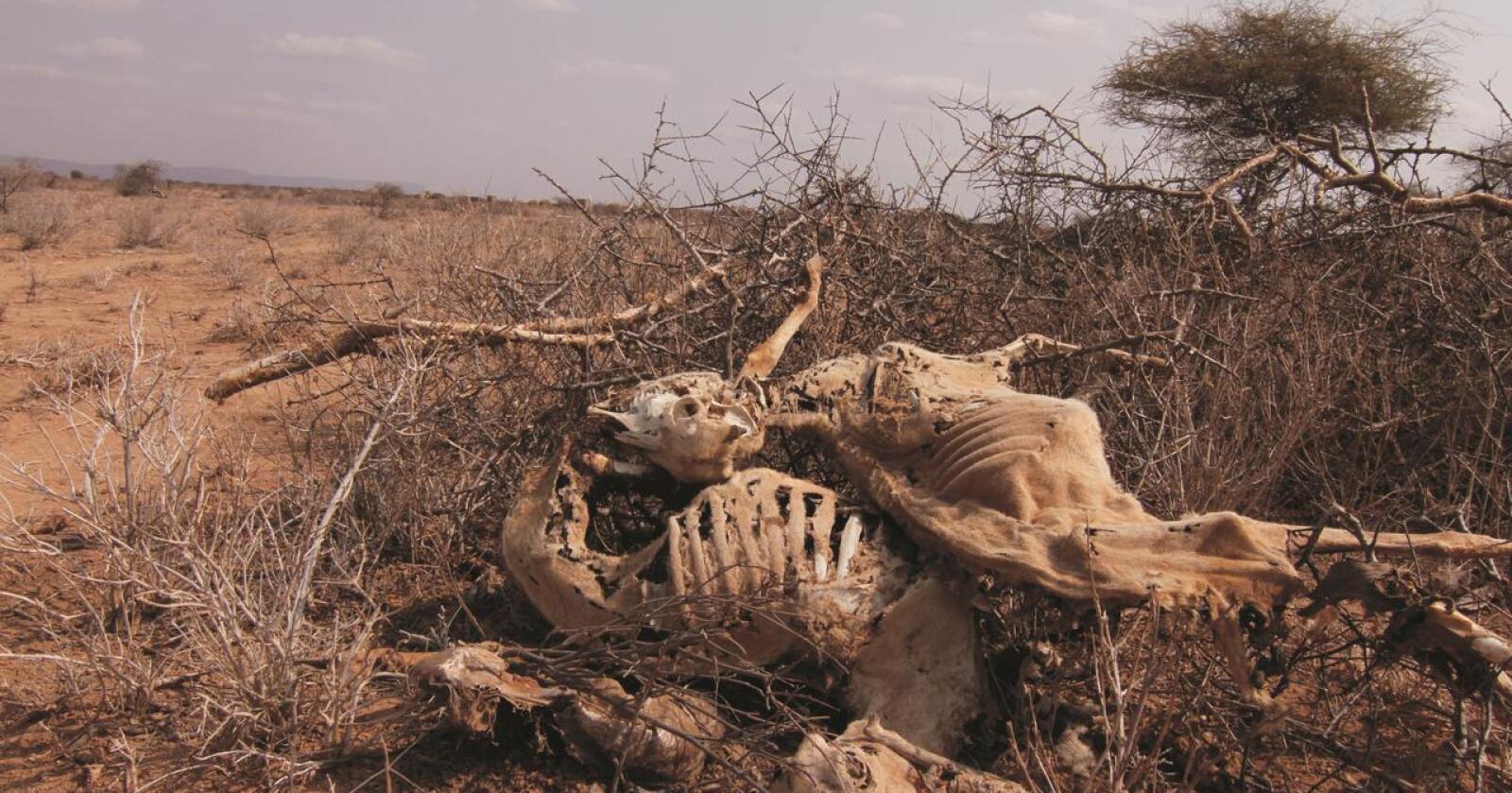 Klaseeffekt: Covid-tiltak, sammen med klimaendringer, krig og konflikt, øker sulten i verden. Foto: Kirkens Nødhjelp
