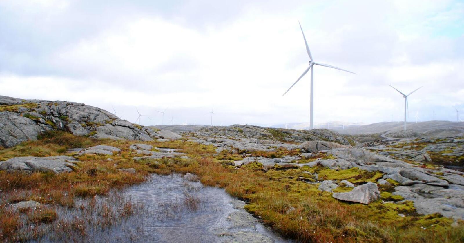 Høyesterett mener at vindkraftutbyggingen vil ha en vesentlig negativ effekt på reineiernes mulighet til å utøve sin kultur på Fosen. – Det er en veldig viktig dom i reindriftsnæringen, sier advokat Andres Brønner i Sør-Fosen Sitje til NRK. Foto: Lars Bilit Hagen, Nationen