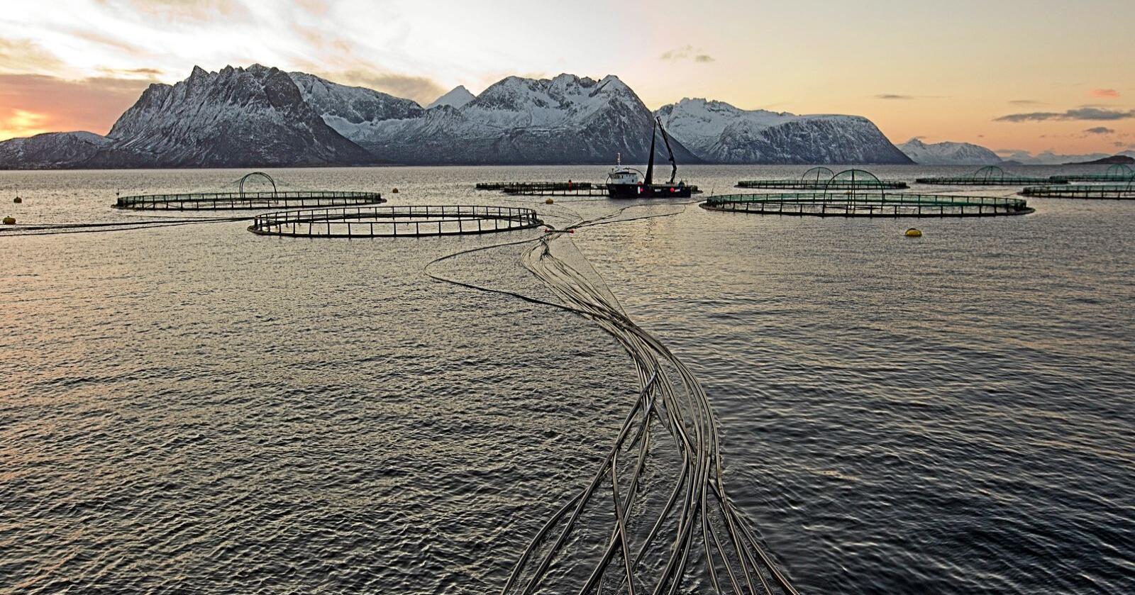 Skatt: Skal oppdrettsnæringen betale grunnrenteskatt? Foto: Terje Bendiksby / NTB scanpix