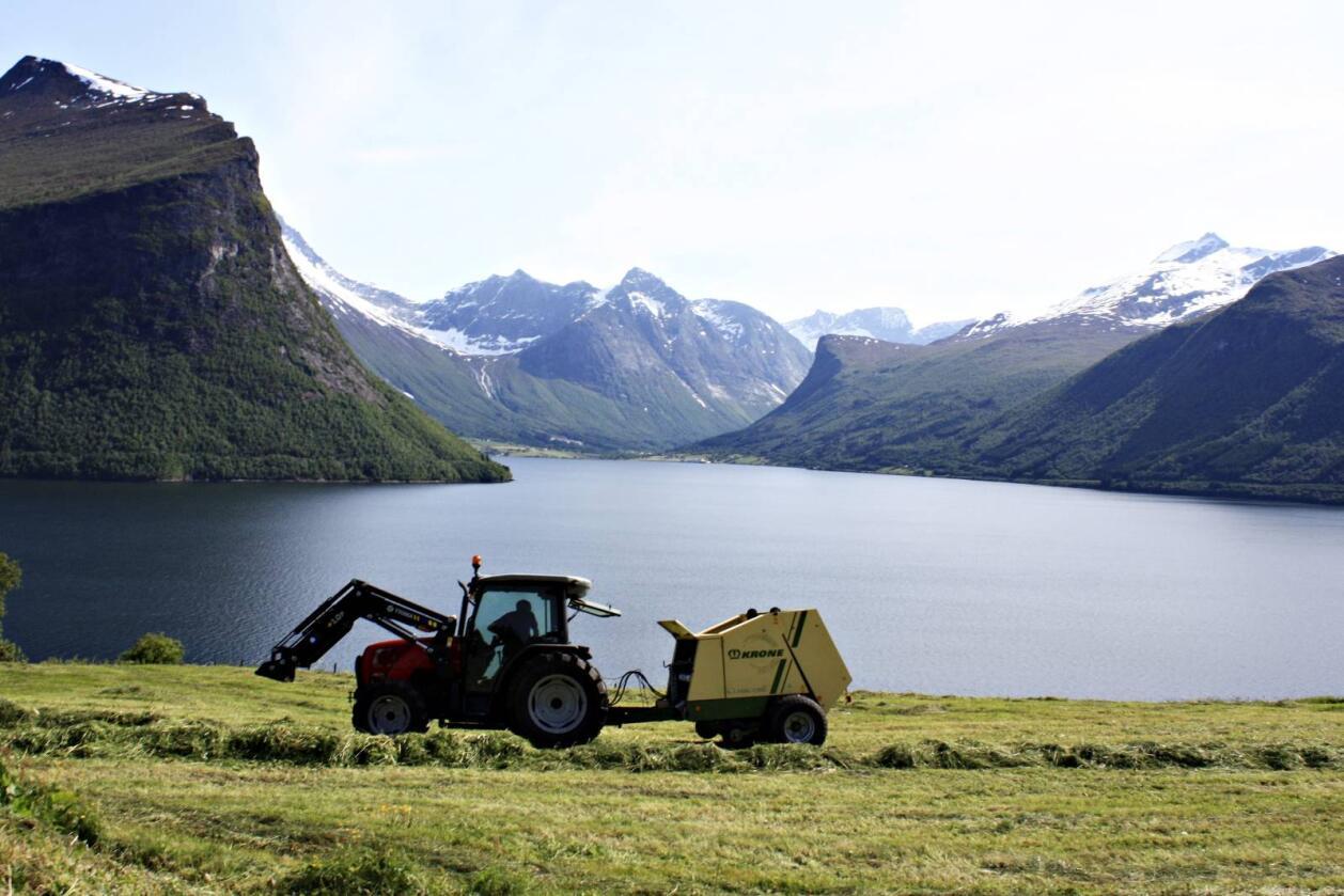 I fleire tiår har lakseparasitt øydelagt mange norske lakseelver, også Rauma og sju andre vassdraga inst i Romsdal. Her er Innfjorden i Møre og Romsdal. Foto: Colourbox
