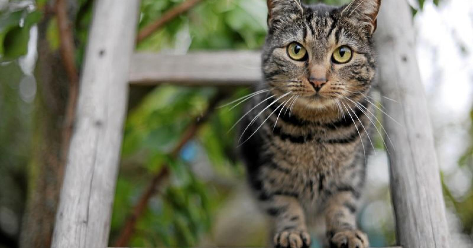 De fleste dyrene som fikk hjelp fra Dyrebeskyttelsen i fjor var katter. Foto: Frank May / NTB scanpix