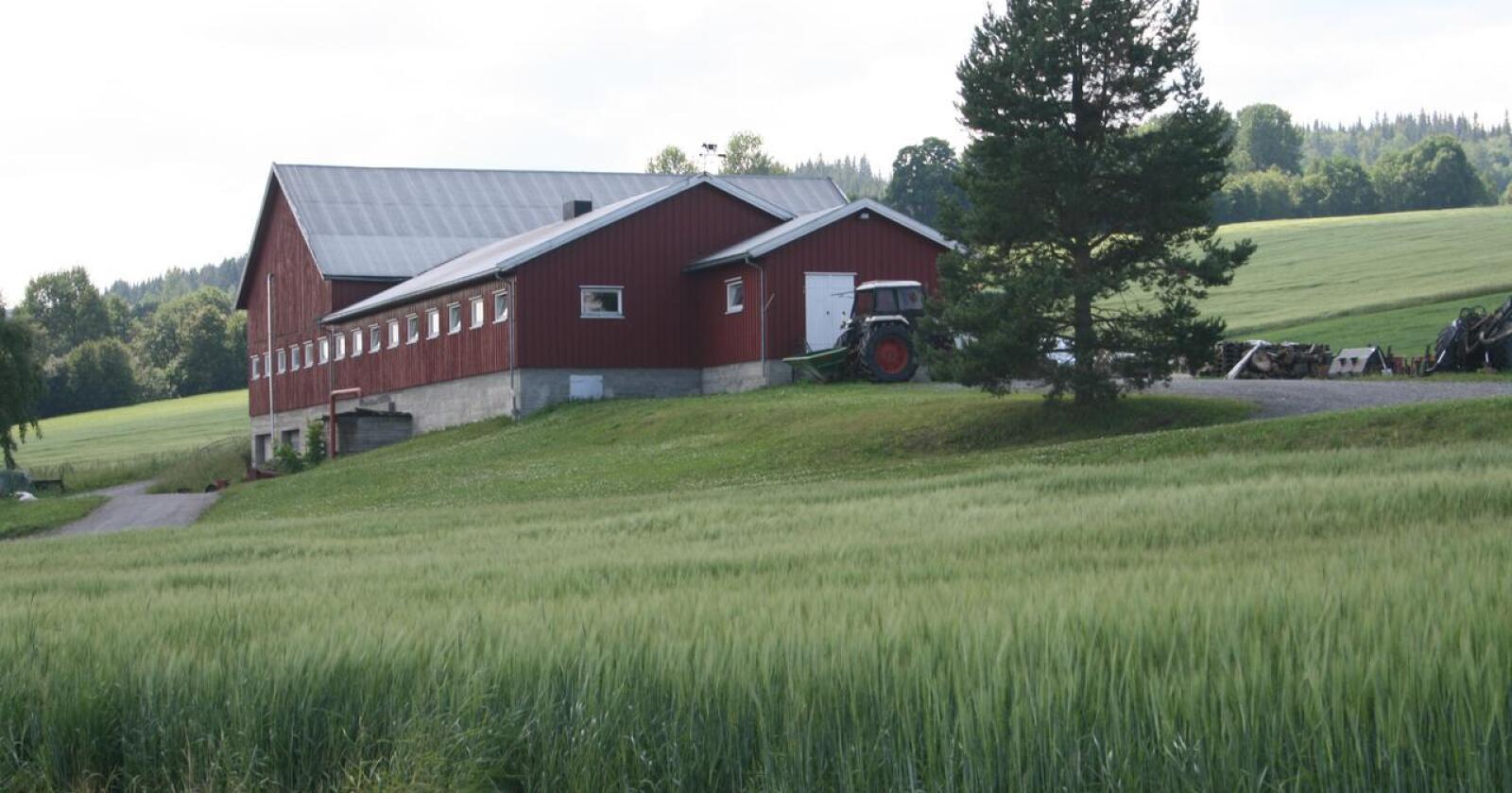 Prisvekst: Staten tilbyr ein prisvekst på mellom 3 og 3,5 prosent for dei fleste kornslag og litt under 2,9 prosent vekst i dei samla tilskota til jordbruket. Her frå Vestre Toten i Innlandet. Foto: Bjarne Bekkeheien Aase