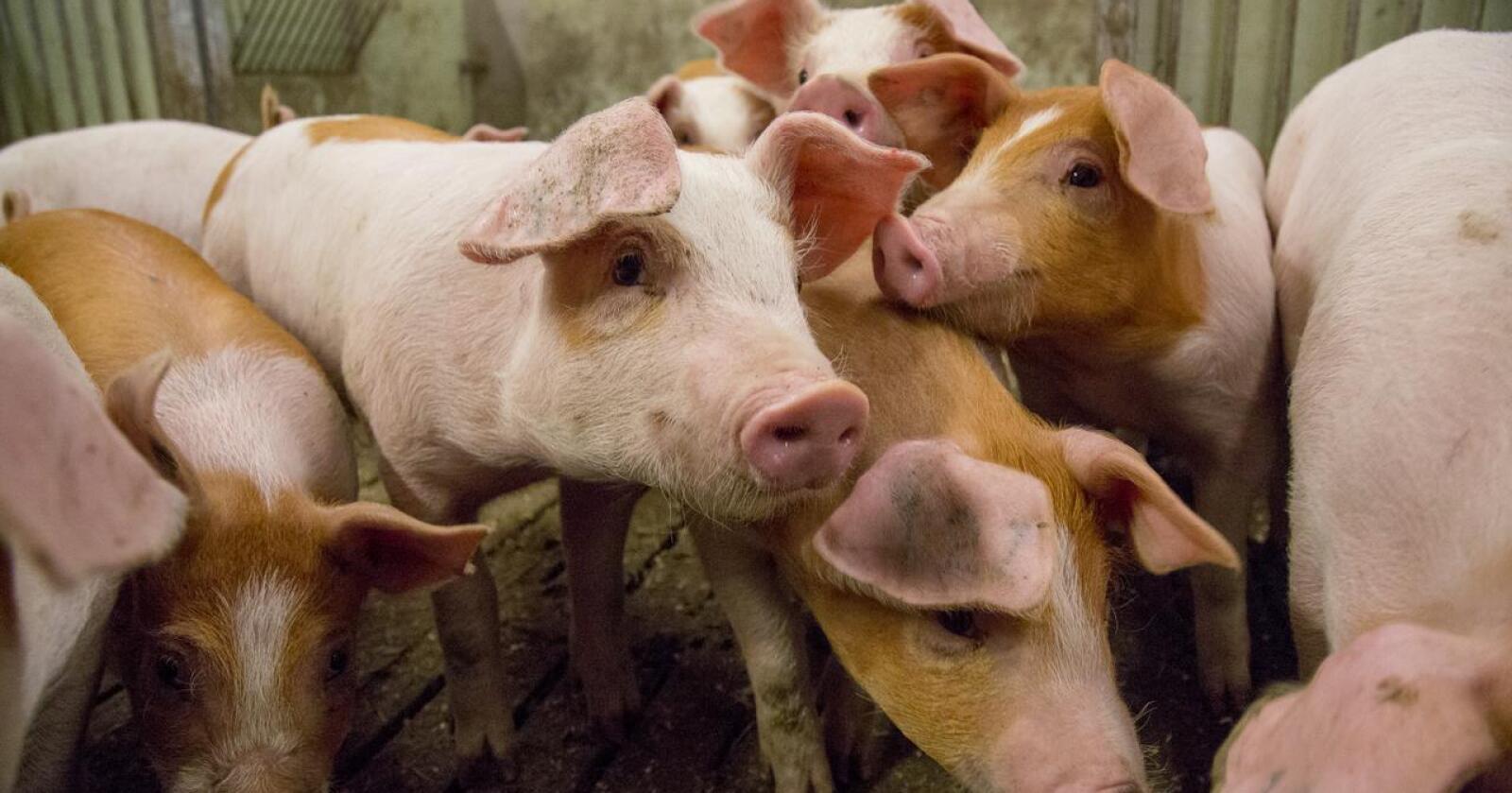 Foods of Norway skal lage gjærprotein av trebiomasse for å erstatte importert soya.