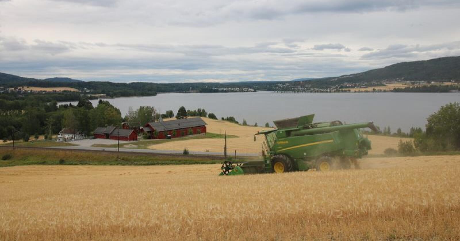 Leielkøring: Det er mange hensyn som bestemmer prisen på treskeroppdraget. På bildet ser vi entreprenørene i TT Landbruk høste seksradersbygg  med en John Deere T560i på Hadeland. Foto: Magasinet Traktor.