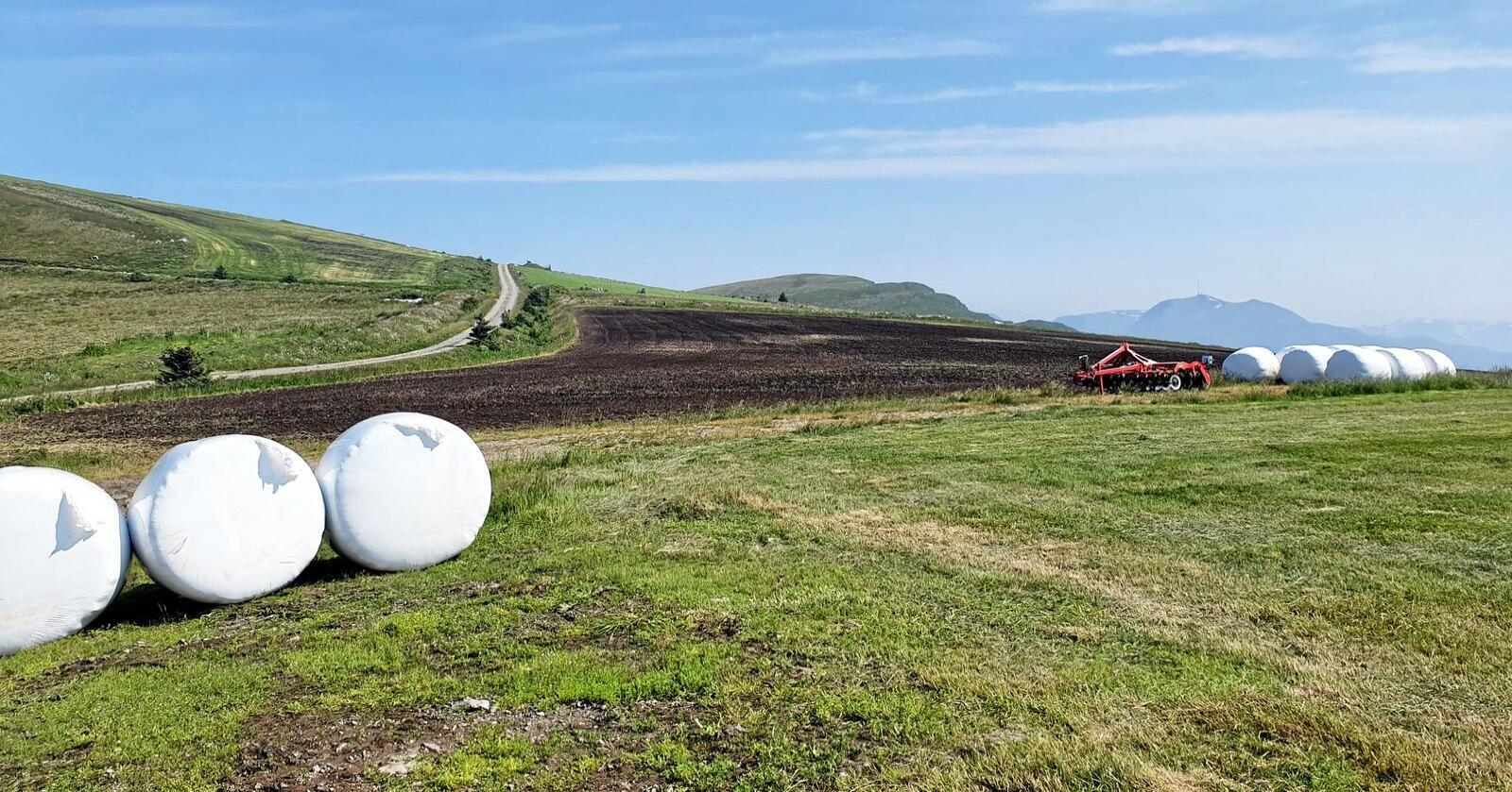 Dyrka mark på Haramsøya i Ålesund. Her skal det bygges vindkraft. Foto: Priat