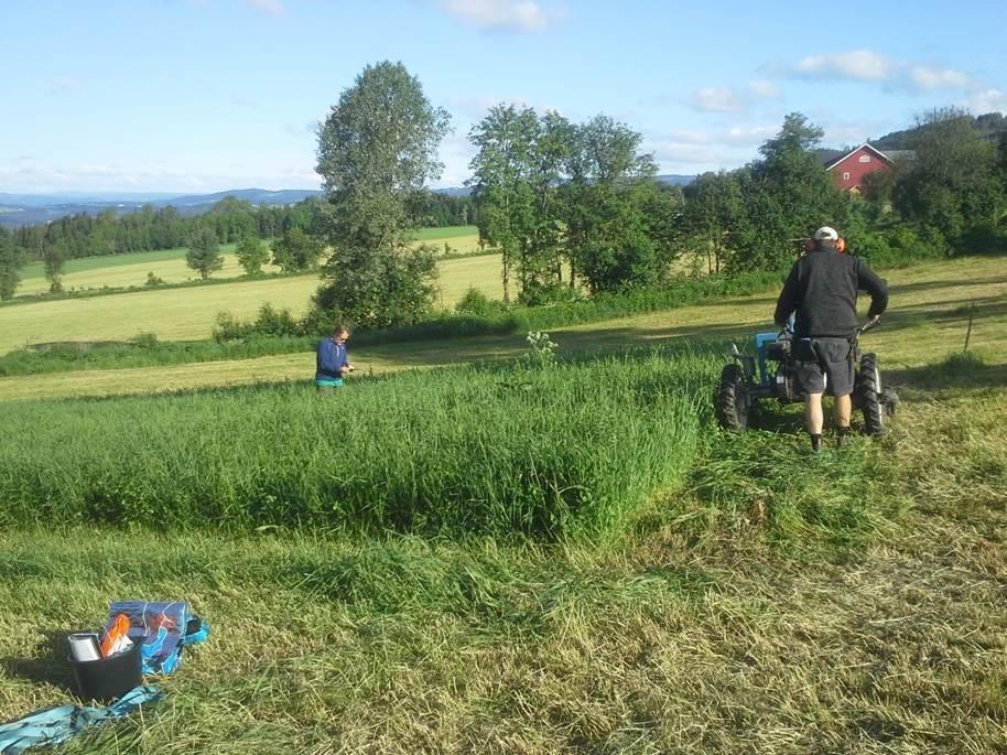Her slås gras i forsøksfeltene på Hedmarken. Junigraset ga størst proteininnhold i grassafta. Foto: Wout Mutsaers.