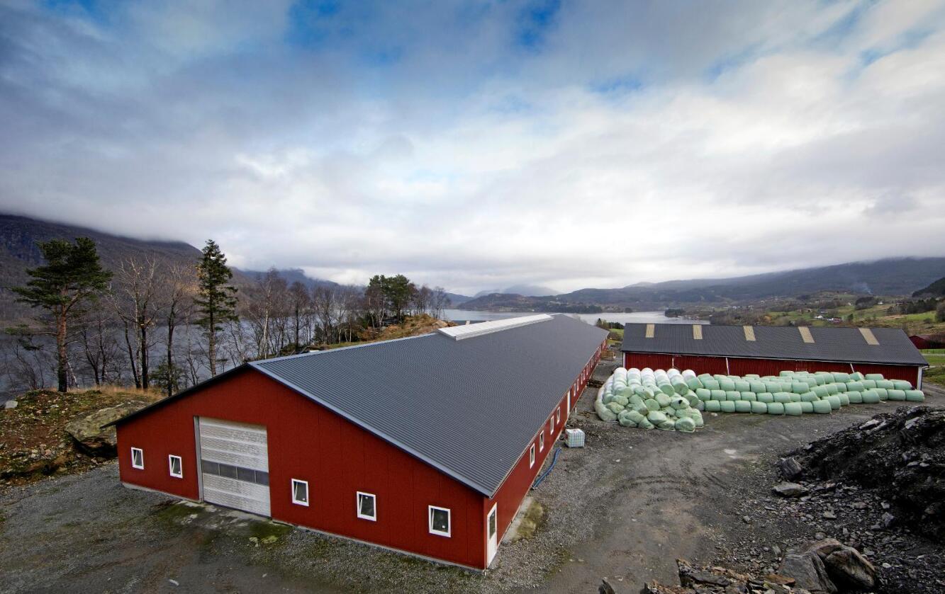 Saueutbygging: Det nye sauehuset som Inge Morten og Venke Tronstad har bygd i Etne i Hordaland har plass til 1200 sauer og er truleg landets største. Foto: Jan Kåre Ness