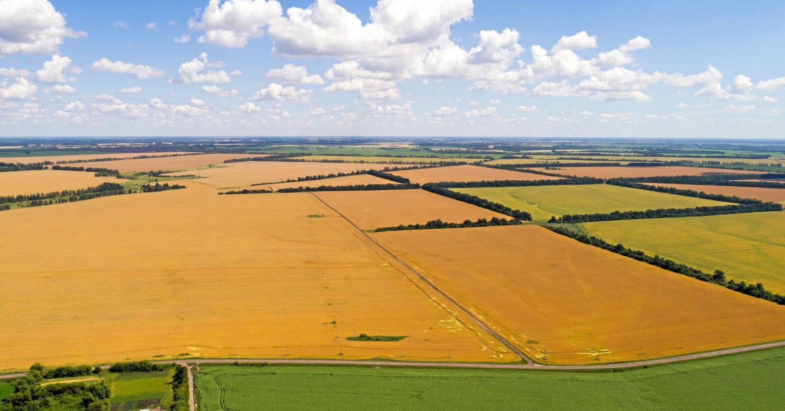 Russiske myndigheter vil stoppe eksporten av korn fram til 1. juli. Foto: Mostphotos