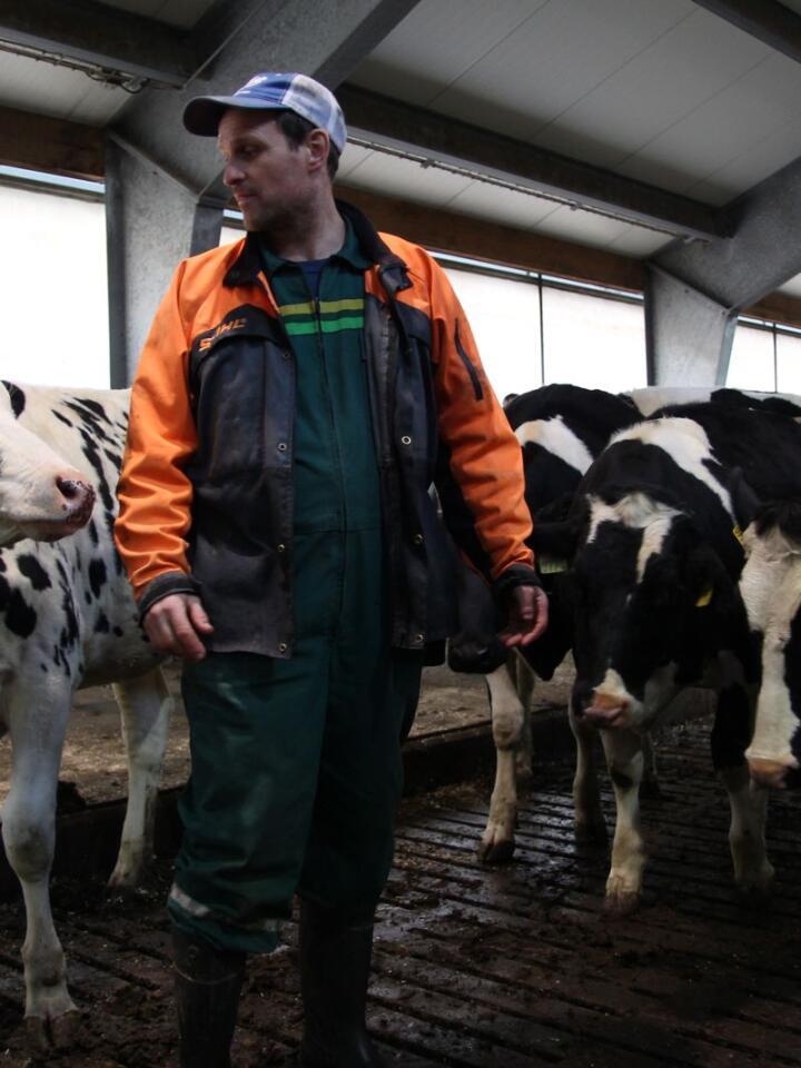 NYE MÅL: Holsteinbesetninga til Willgohs leverte 12 800 kilo EKM per årsku i 2019. Nå vil han inseminere kvigene tidligere, for å forbedre ytelsen og økonomien ytterligere.