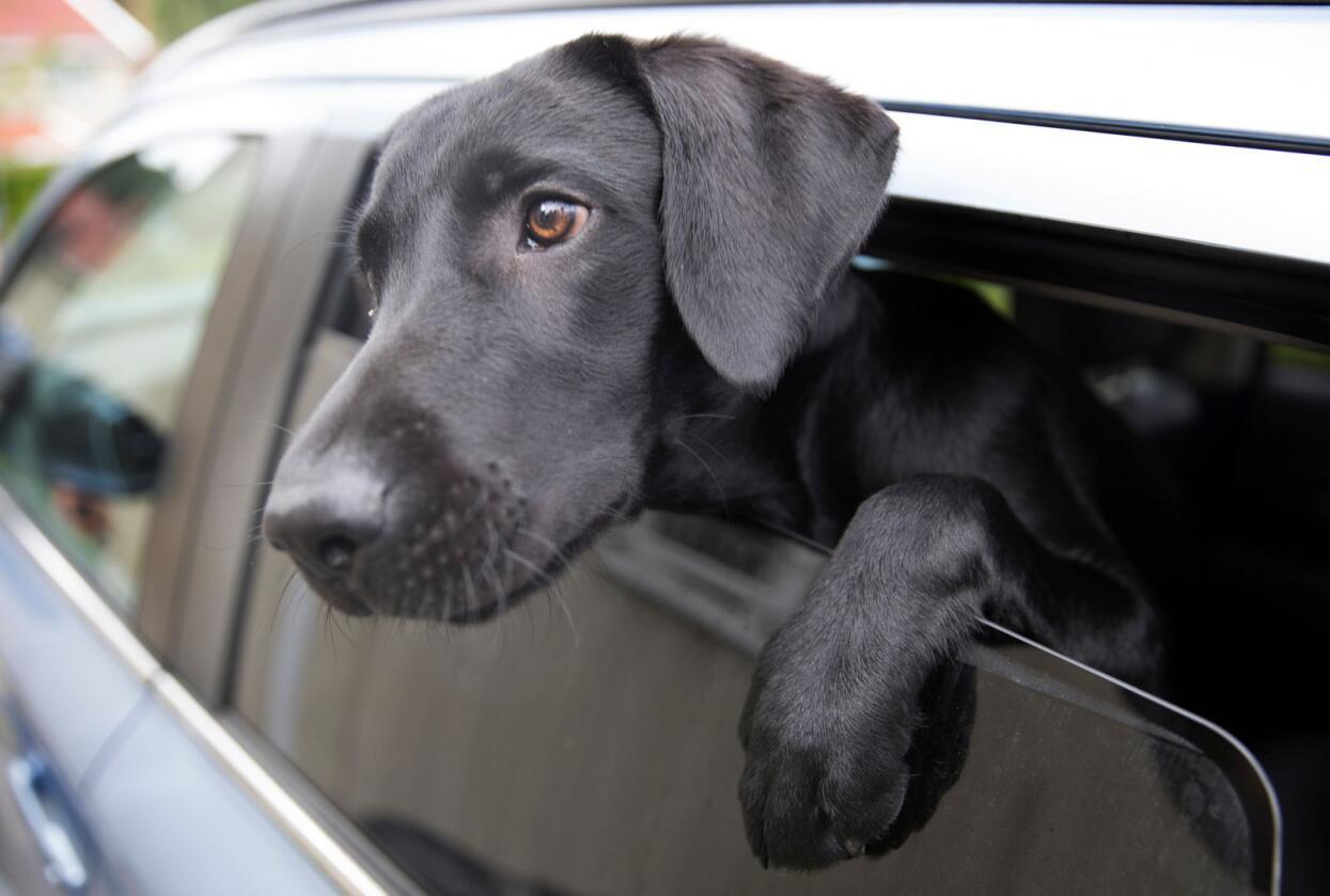 Regjeringen foreslår endringer i hundeloven. Foto: Jon Eeg/NTB