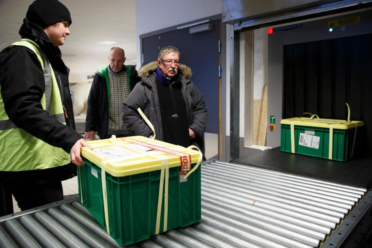 Åsmund Asdal (bak) og Roland Von Bothmer fra Nordisk genressurssenter (NordGen) henter i 2016 kasser med frø fra Japan og USA som ankom Longyearbyen på Svalbard. Foto: Heiko Junge / NTB scanpix