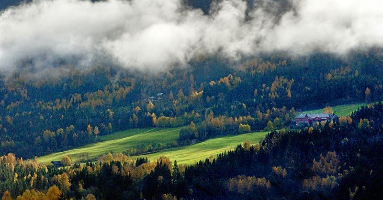 Eierskap: Mer og mer av jordbruksjorda blir leid ut til andre som trenger jord. Foto: Siri Juell Rasmussen