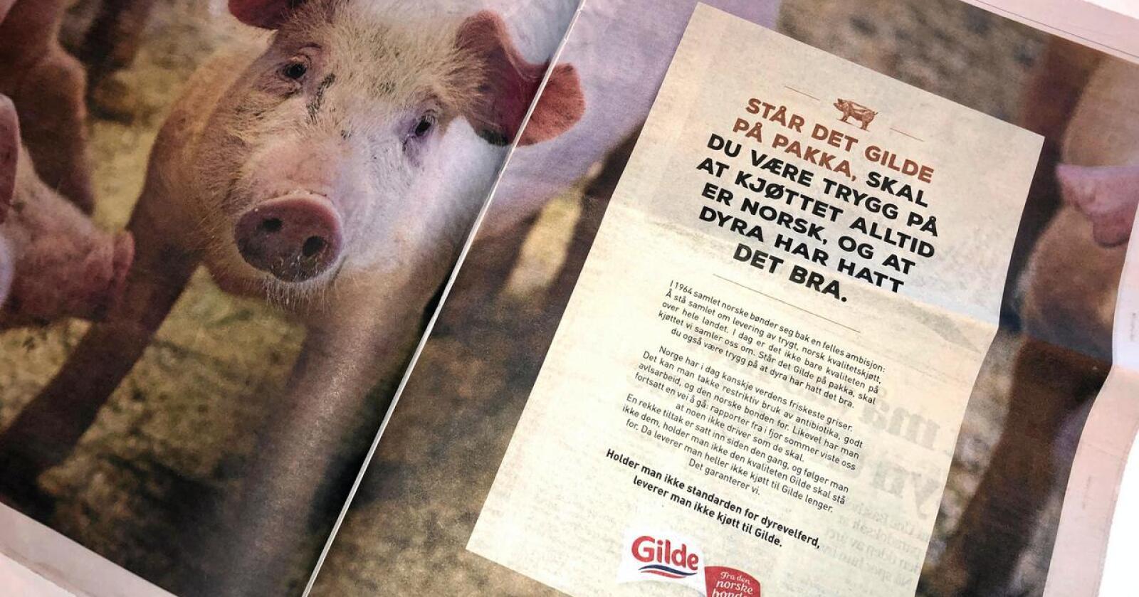 Markedsføring: Gilde-annonse dagen etter NRK-dokumentar om svinenæringa i 2019. (Foto: Lars Bilit Hagen, Nationen)