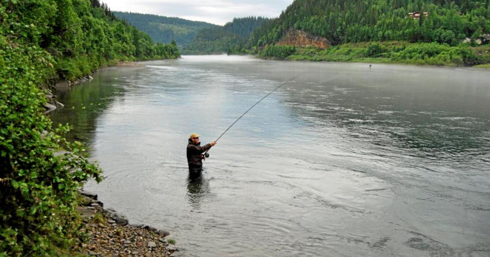 Kombinasjon: Vannkraftproduksjon har ikke fjernet laksen fra Ranaelva i Nordland . Foto: Norske Lakseelver