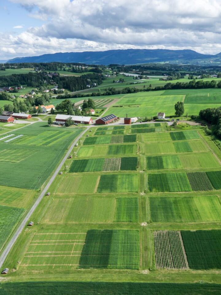 Endring: 12 minigårdsbruk drives individuelt på NIBIO Apelsvoll med ulike vekstskifter, ulik jordarbeiding og ulik strategi på gjødsel og plantevern. Foto: Nibio