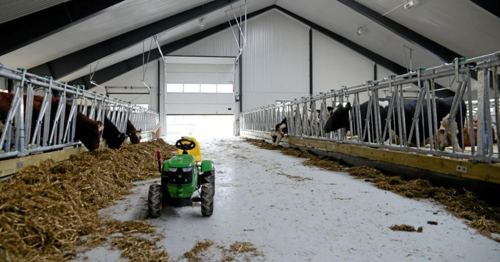 Velferd: Eg meiner det er svært viktig å satse på velferdsordningane framover for å sikre rekruttering inn i landbruksnæringa, skriv innsendaren. Foto: Mariann Tvete