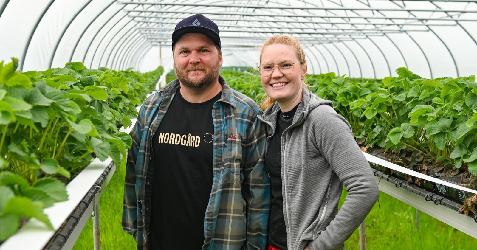Mikael og Magna Nordgård-Melander ønsker å servere folk i Tromsø ferske jordbær dyrket under midnattssolen. De bruker sortene Sonata og salsa. (Alle foto: Marie Hatlevoll)