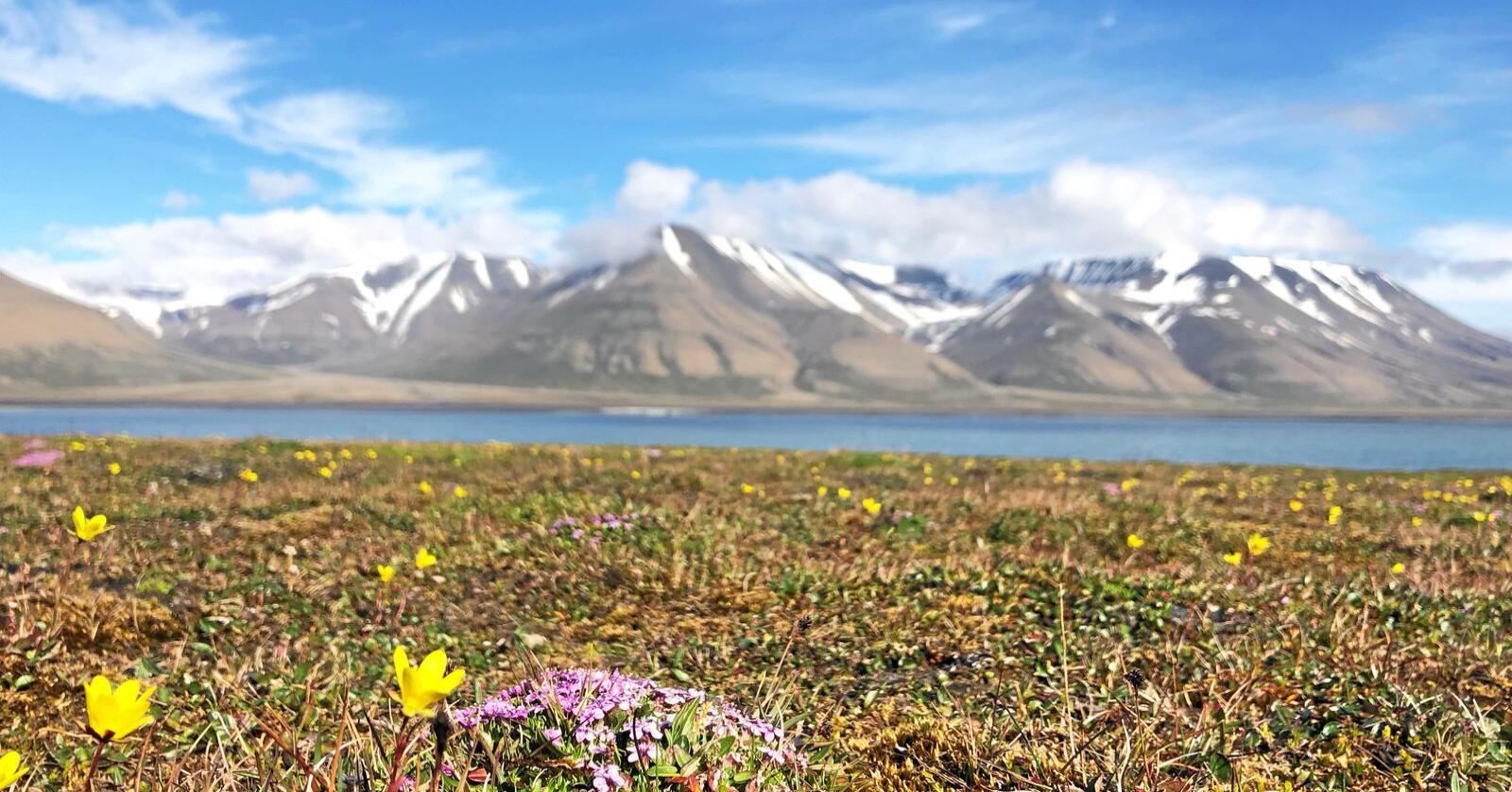 Foregangsland: Norge kan spille en viktig rolle gjennom å være et foregangsland for en kunnskapsbasert naturforvaltning, skriver Vigdis Vandvik. Foto: Vigdis Vandvik