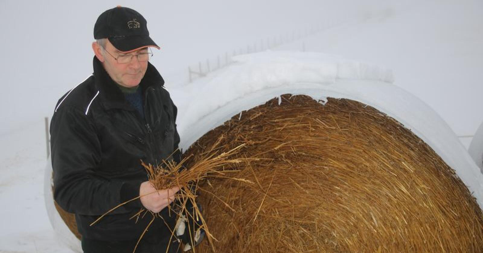 Halm ble redningen: Thorstein Hensrud studerer kvaliteten på halmen. Han legger ikke skjul på at den gode responsen fra kornbøndene har vært redningen etter tørkesommeren. Foto: Lars Olav Haug