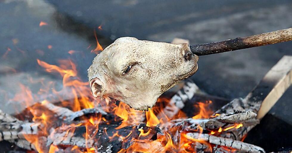 Tradisjonelt har det vært vanlig å svi hodene over åpen flamme, for så å skrape av ulla og vaske vekk sotet. Foto: Kristin Bergo
