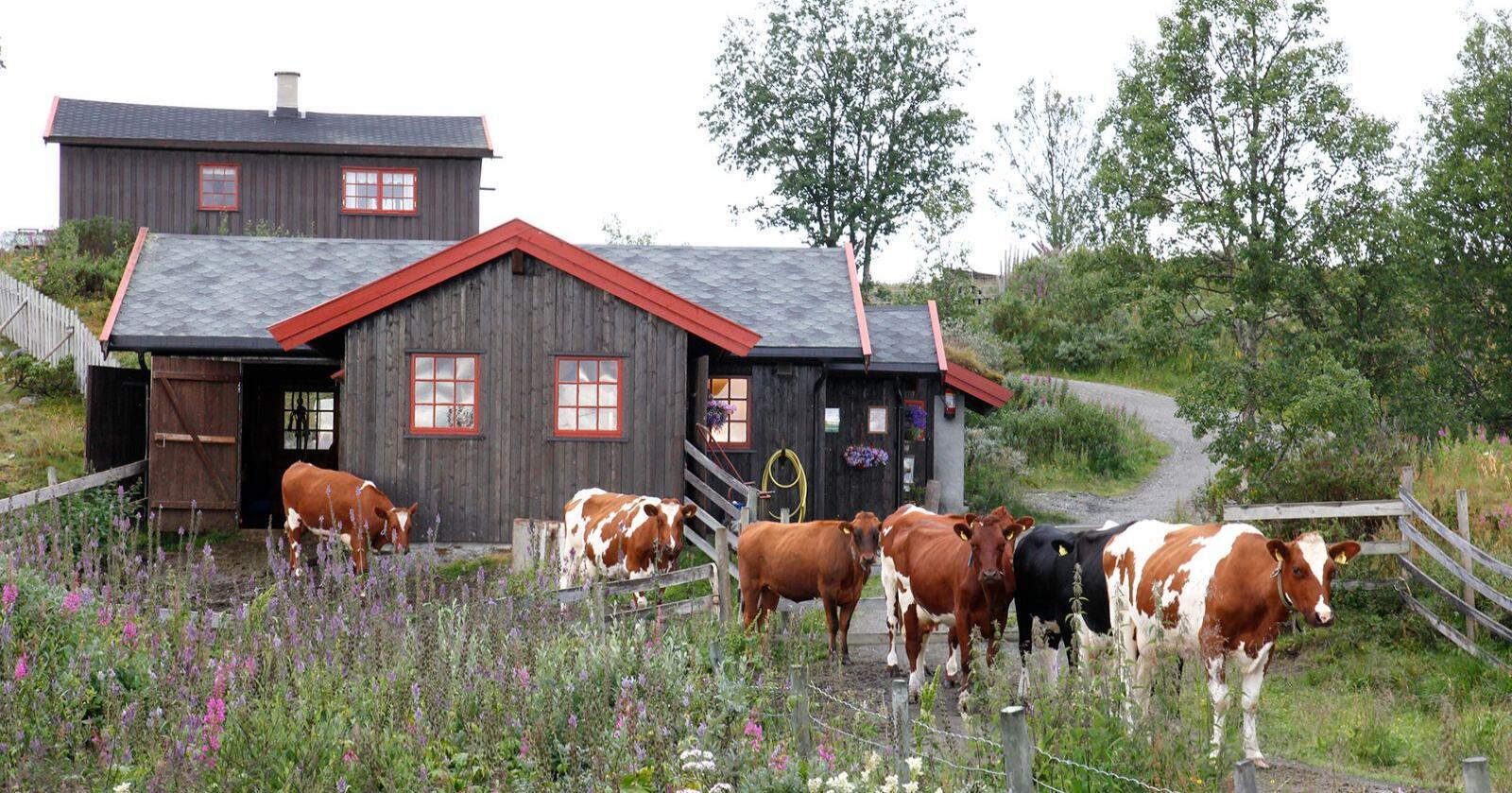 Strandmo Stølsysteri i Valdres. Foto: Oskar Puschmann