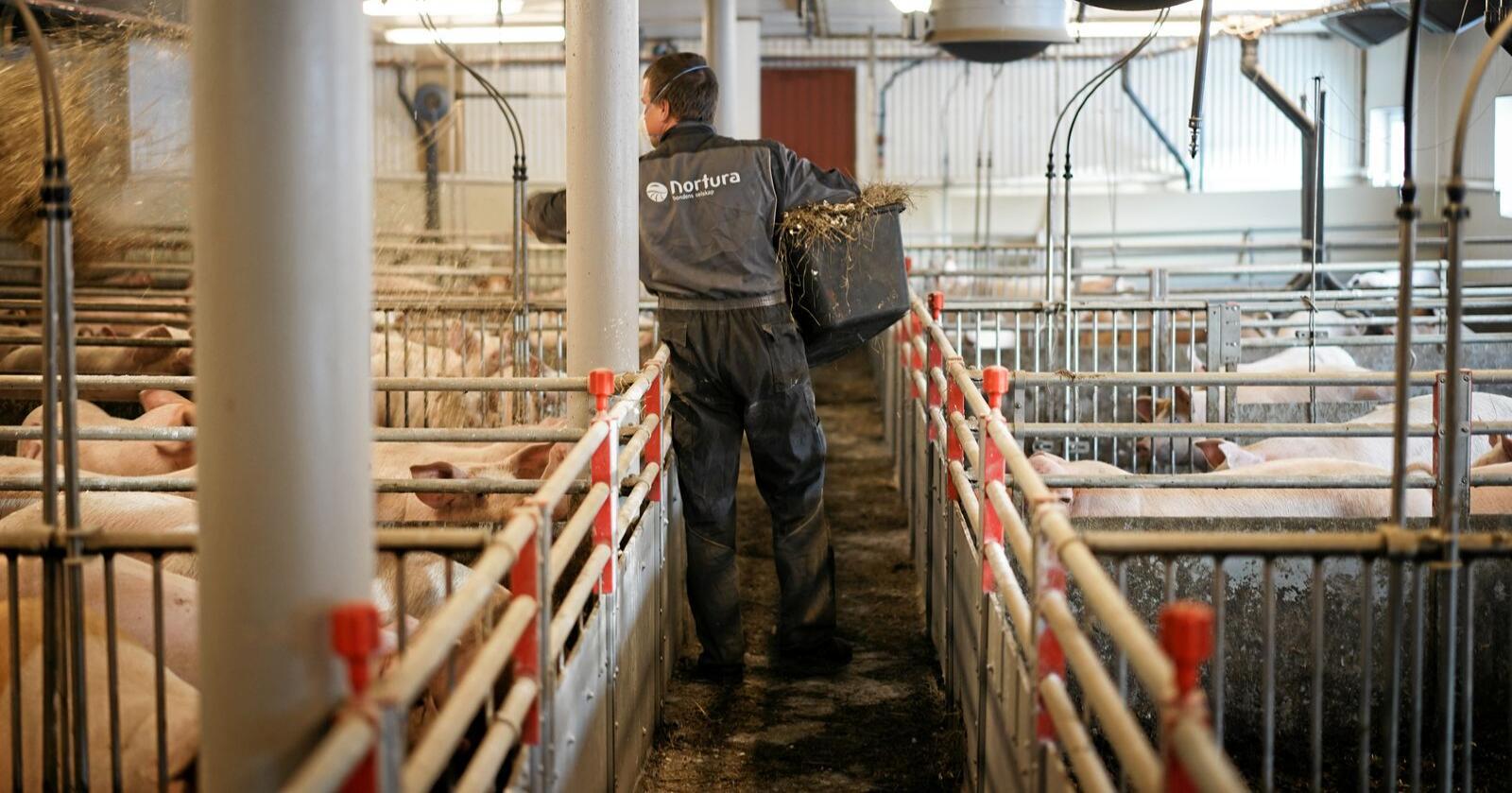 Bøndenes innsats, med blant annet smittevern, har mye å si for kampen mot antibiotikaresistente bakterier i Norge. Illustrasjonsfoto: Benjamin Hernes Vogl