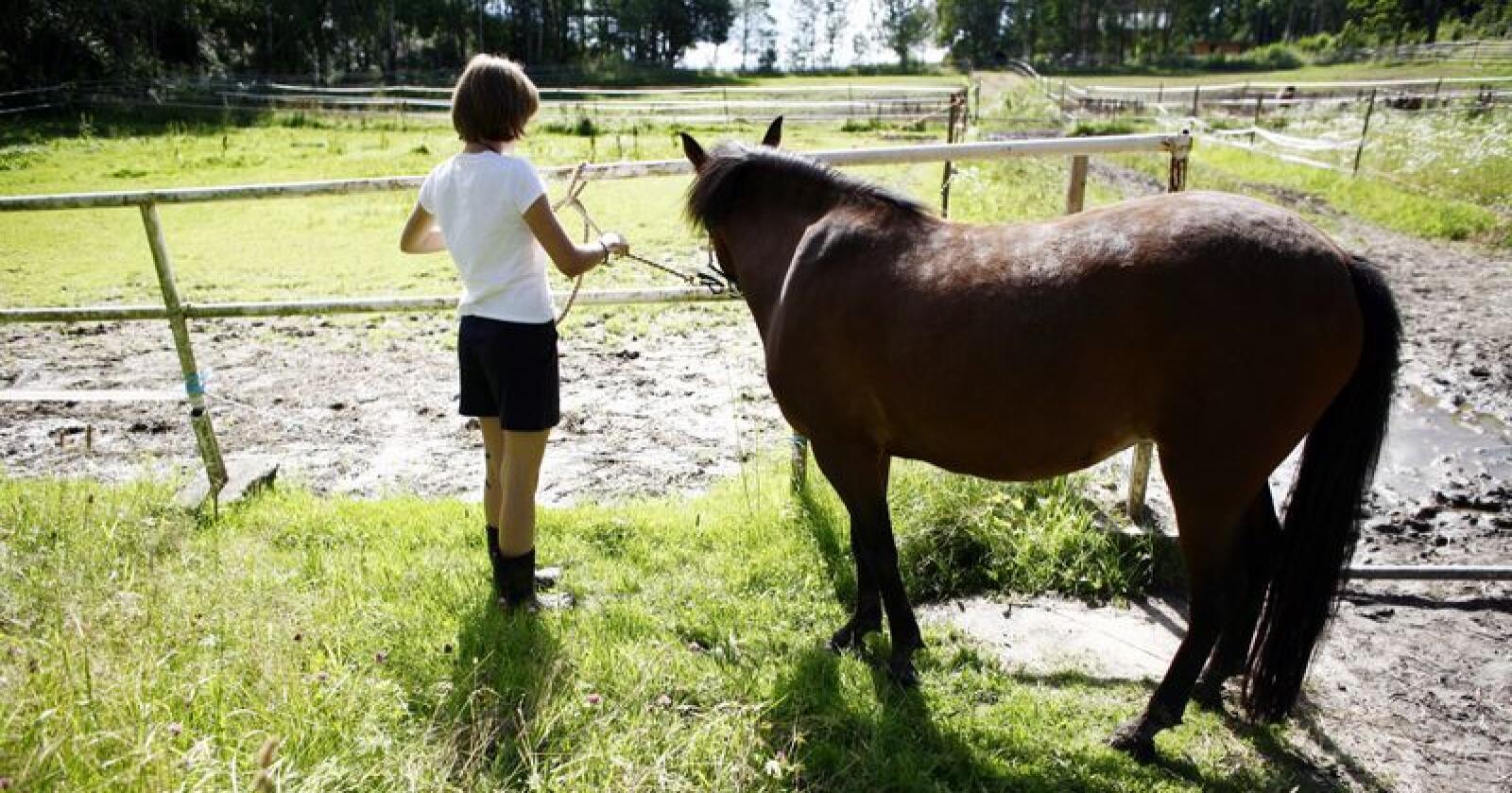 At mange ser hesten som eit kjæledyr er ein av faktorane som gjer at bruken av hestekjøt går ned. Foto: Sara Johannessen / NTB Scanpix / NPK